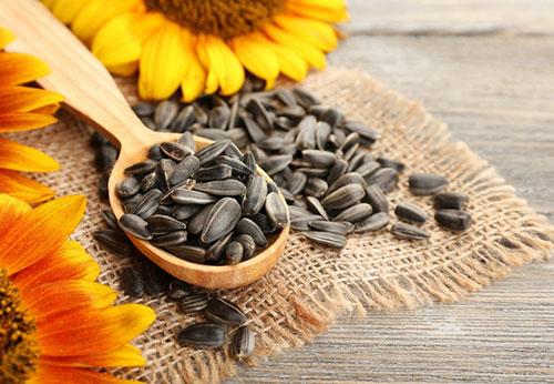 semillas-girasol